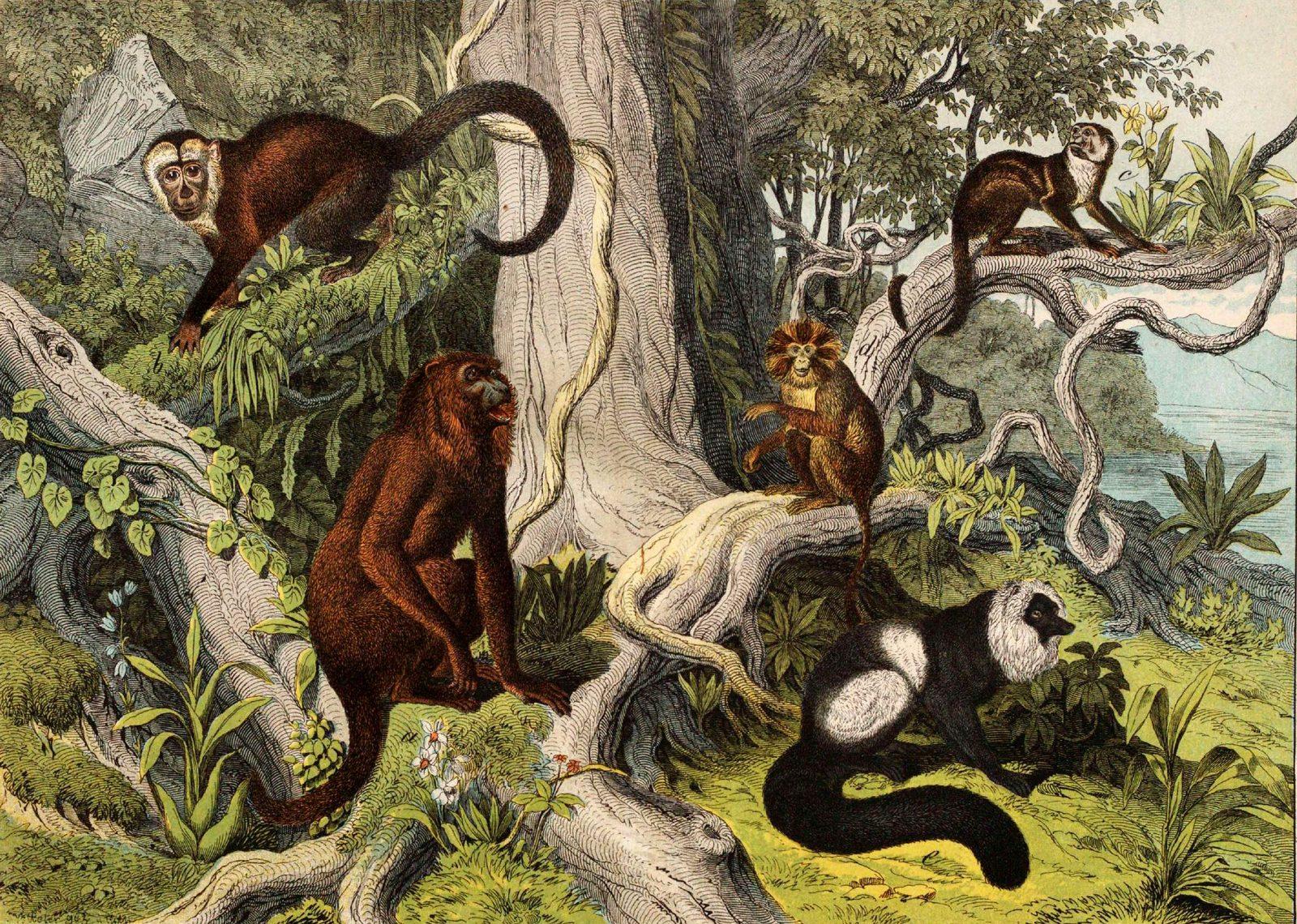 Mammals. Monkeys in the wild.
